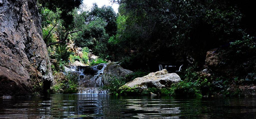 beautiful-branches-cascade-175445