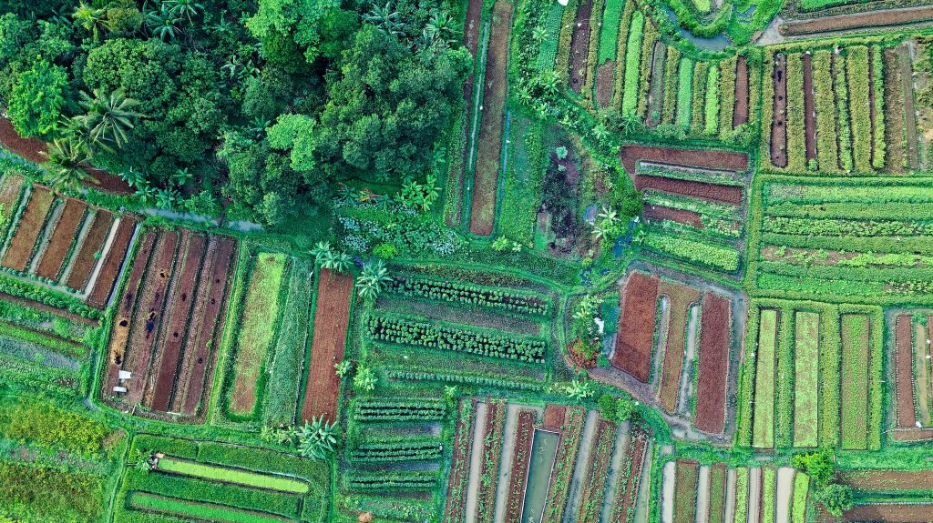 agriculture-bird-s-eye-view-countryside-1573885