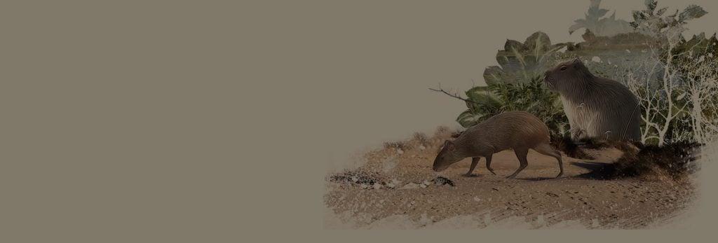 ciencia_animal