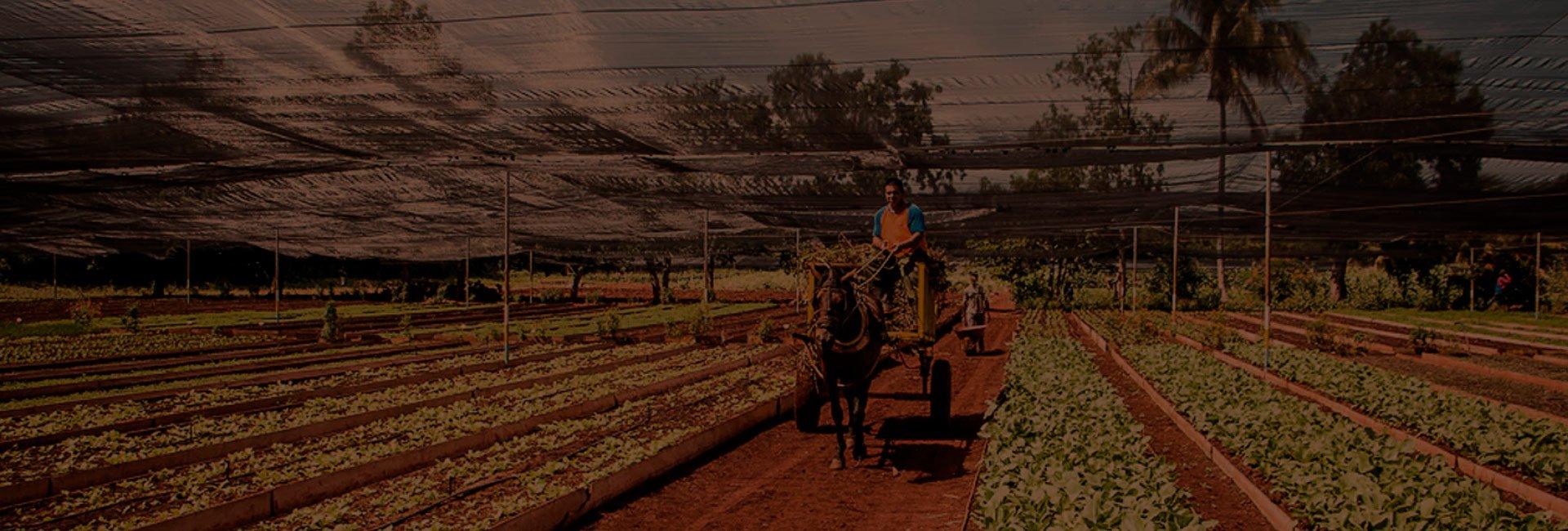 grupo_pruduccion_agricola_sostenible
