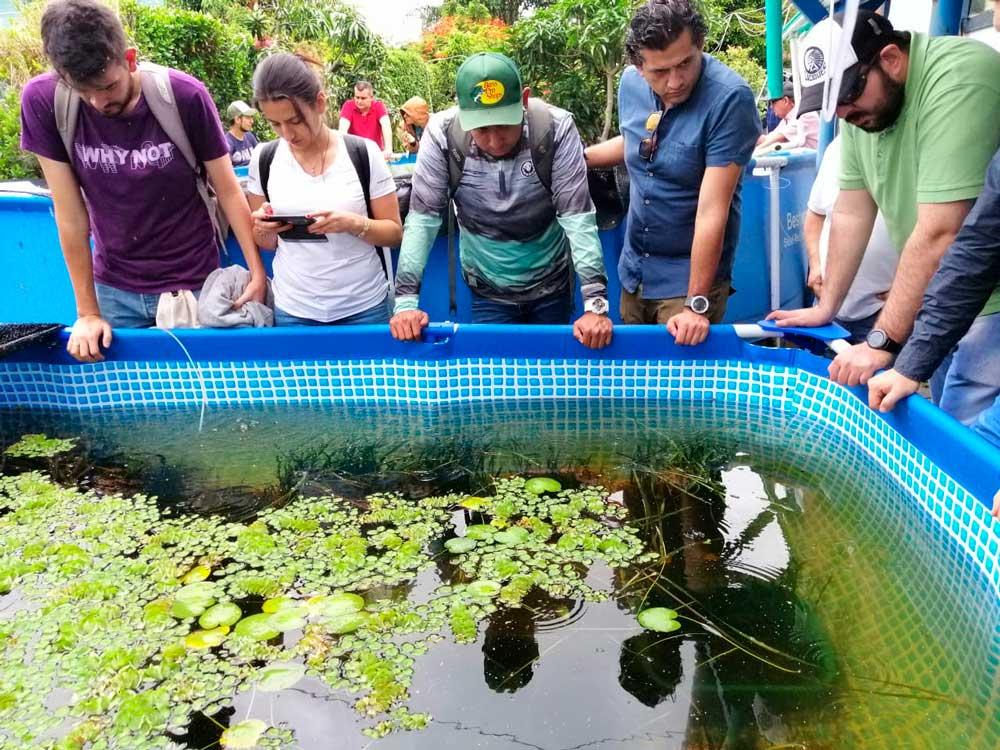 Curso internacional de producci n de peces ornamentales for Reproduccion de peces ornamentales