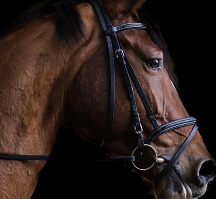 dipomado_equinos